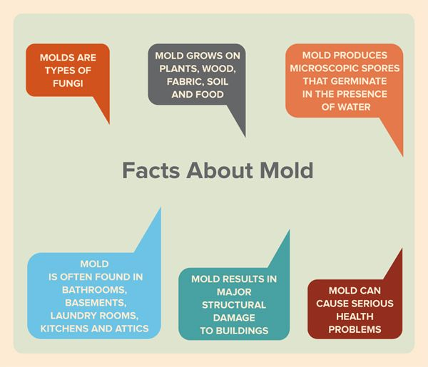 Mold facts you should never forget. Please share with family, friends and neighbours. #mold #awareness #facts #education