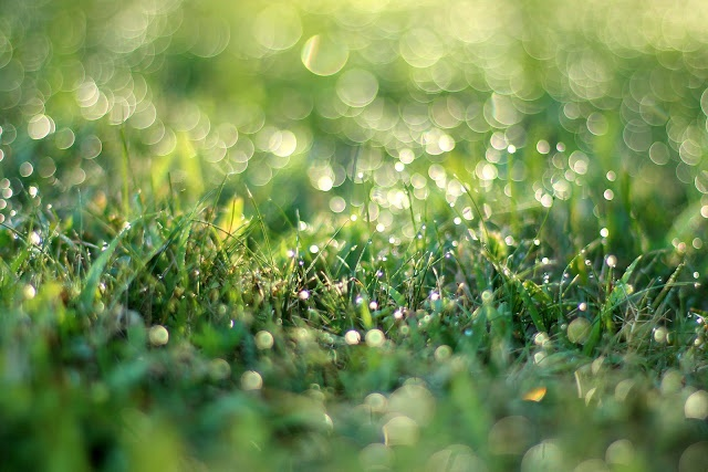 Dew on the early morning grass