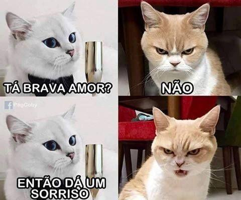 BEM ASSIM MESMO! hehe #petmeupet #gato