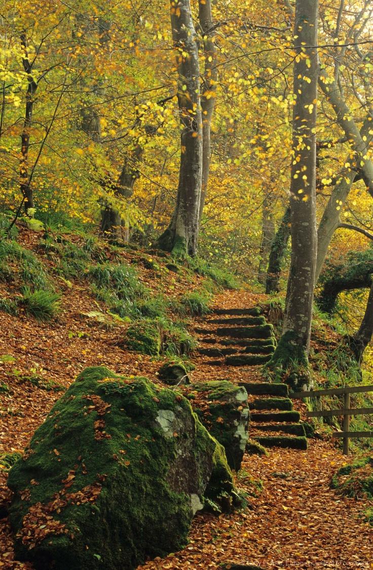 Autumn colours near Grasmere, Lake District National Park, Cumbria, England, UK