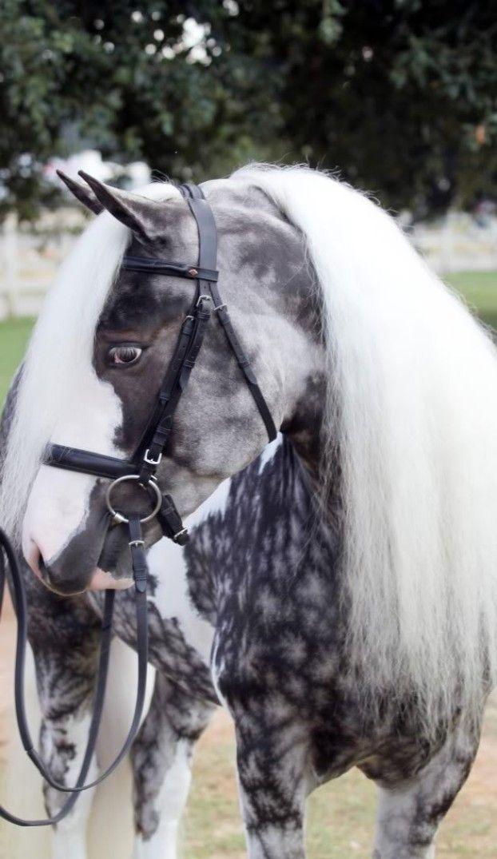 Diese 9 Pferde haben das ungewöhnlichste Aussehen auf dem Planeten. Nr. 7 raubt dir die Atmung.