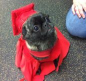 Graduated from puppy school…
