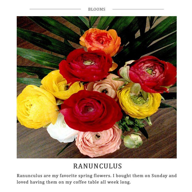 Five Little Things - Ranunculus