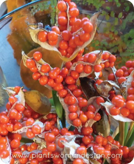 seed pods, fall decor, bring autumn inside with these easy hurricane containers