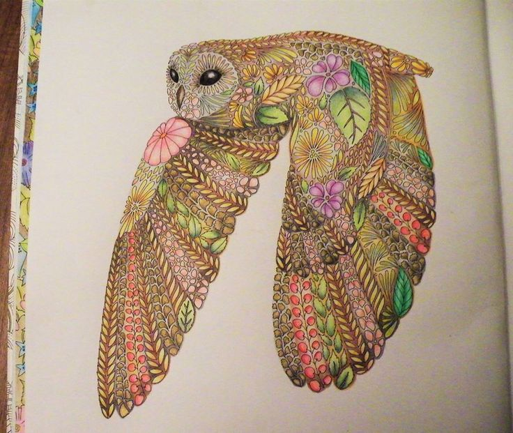Coloring Ideas Owl Animal KingdomColoring BooksColouringPencil