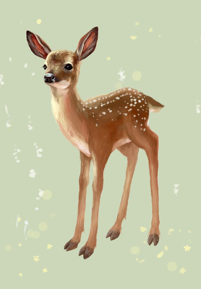 deer fawn drawing images galleries with a bite. Black Bedroom Furniture Sets. Home Design Ideas