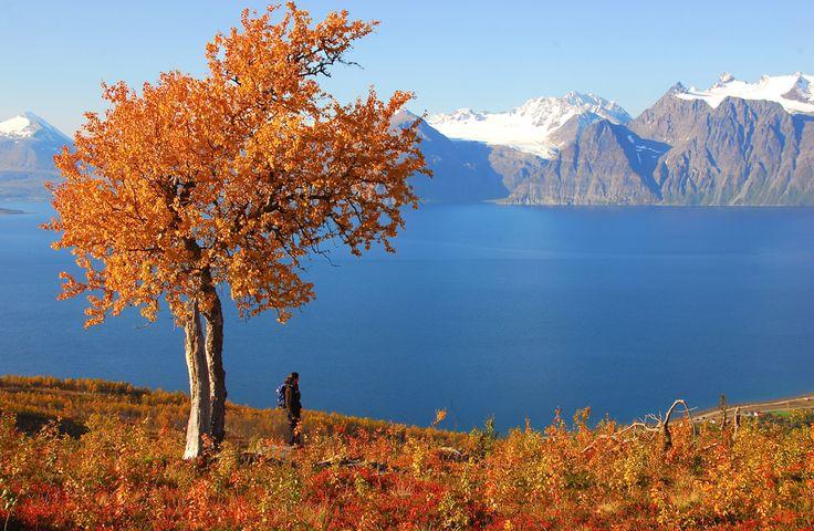 Lyngen Alps Norway
