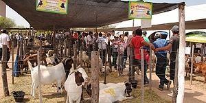 Se viene IV Expo Feria de ganado menor y animales de granja en Formosa  http://www.rural64.com/st/turismorural/Se-viene-IV-Expo-Feria-de-ganado-menor-y-animales-de-granja-en-Formosa-4783