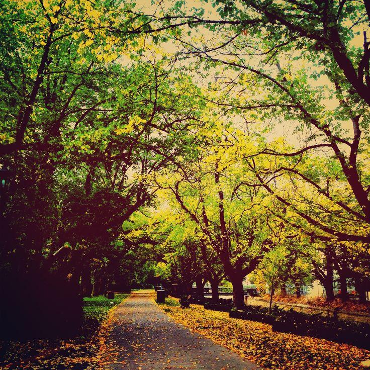 Rosalind Park, Bendigo.