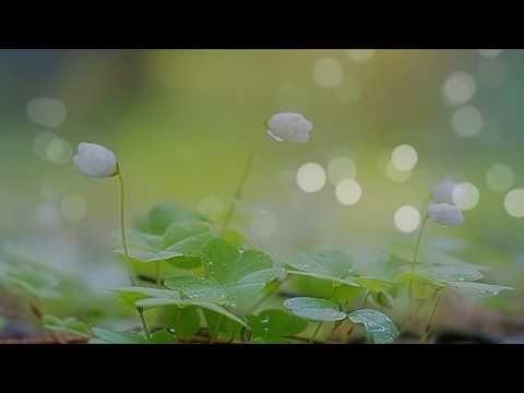 Мантра релакс  успокаивает нервную систему - YouTube