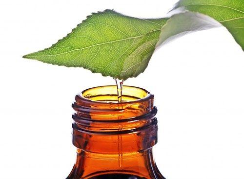 Olio essenziale di tea tree, proprietà e benefici