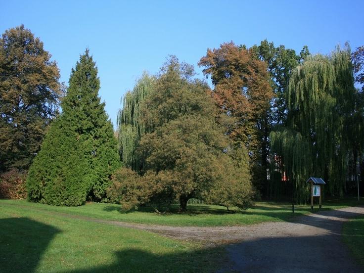 Čechy pod Kosířem - Zámecký park 2