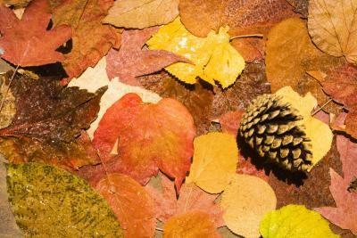 Manualidades hechas con hojas y piñas secas para los niños en el Día de Acción de Gracias   eHow en Español