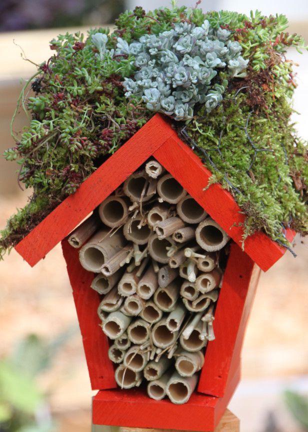 Make a Lady Bug Hotel : HGTV Gardens