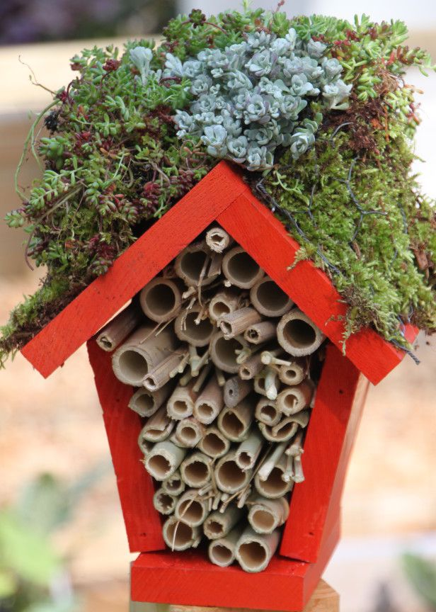 Need: A birdhouse, screwdriver, Outdoor paint, Tape measure, Saw, Bamboo sticks, Wood glue, Sheet of moss, Chicken wire, Potting soil, Plants. (two varieties of sedum used), Staple Gun and staples, Screw eye hook