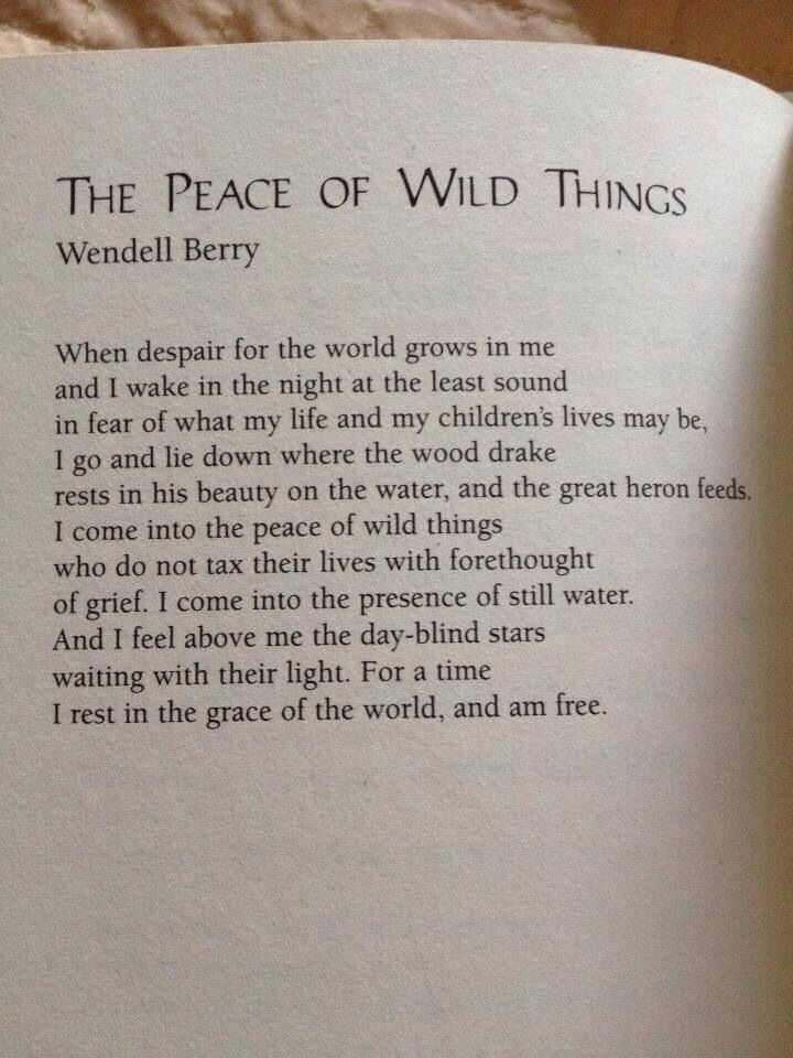 """ who do not tax their lives with forethought of grief"" The Peace of the Wild Things by Wendel Berry"