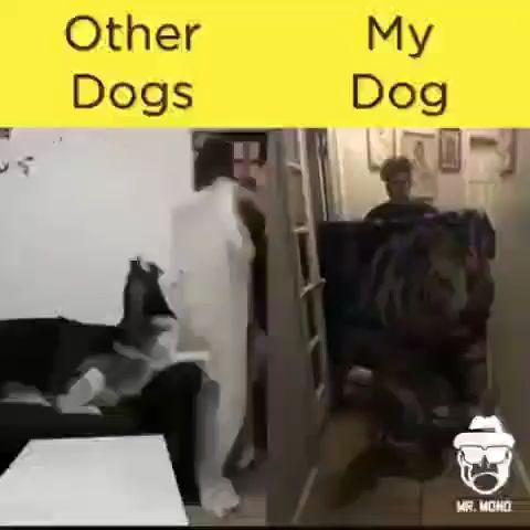 OTHER DOG VS MY DOG!!