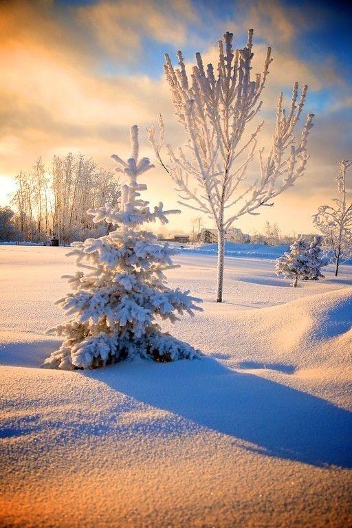 """Кажется, что зимой на фотоаппарате появляется кнопка """"шедевр""""..."""
