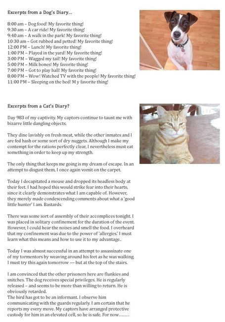 Cat vs. Dog: Cats, Cat Diary,  Internet Site, Dogs Diaries,  Website, Dogs Cat, Web Site, Funny, Cat Diaries