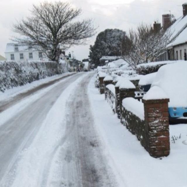Snowy Guernsey