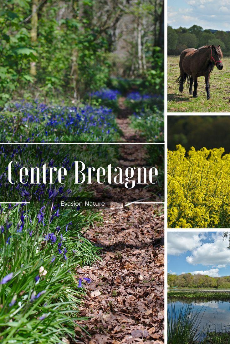 Découverte nature du centre de la Bretagne: rendez vous dans les Monts d'Arrée, au lac de Guerlédan et dans les environs de Rostrenen pour des balades 100% nature et évasion