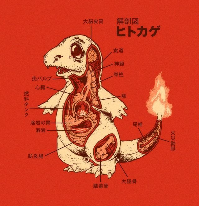 Pokemon anatomy posters designed by DeviantARTist RYE-BREAD