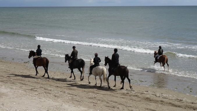 A gentle beach hack from Piperstown Equestrian centre.