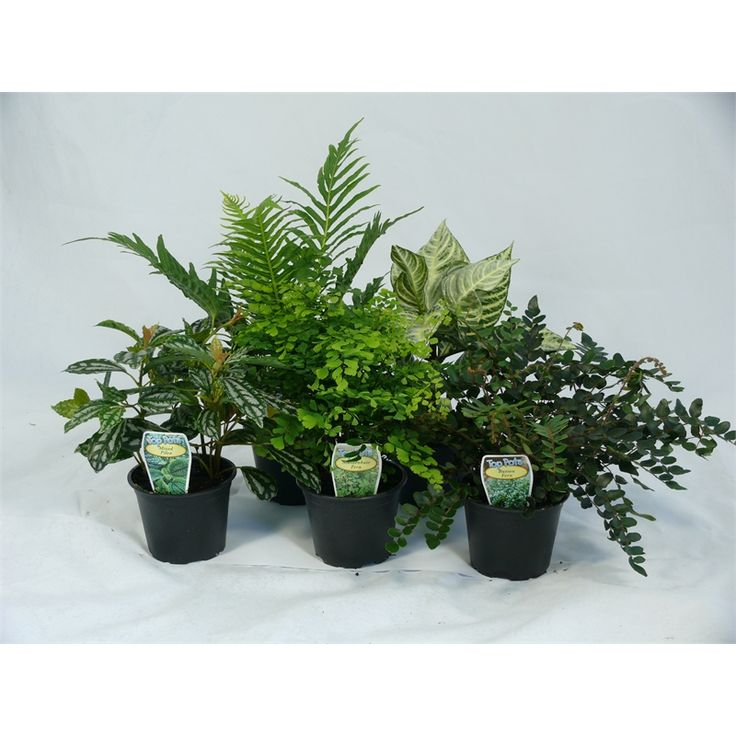 7.00 bunnings Find Plant Table Top Pots Various at Bunnings Warehouse. Visit your local store for the widest range of garden products.