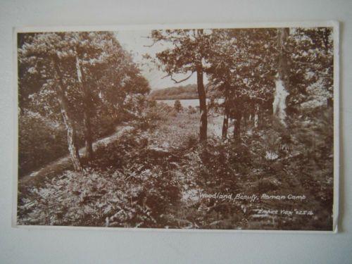 Woodland-Beauty-Roman-Camp-near-Runton-Cromer-Old-Postcard-Empire-View