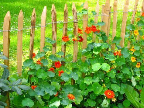 Staketenzaun aus Kastanienecken   – Garten