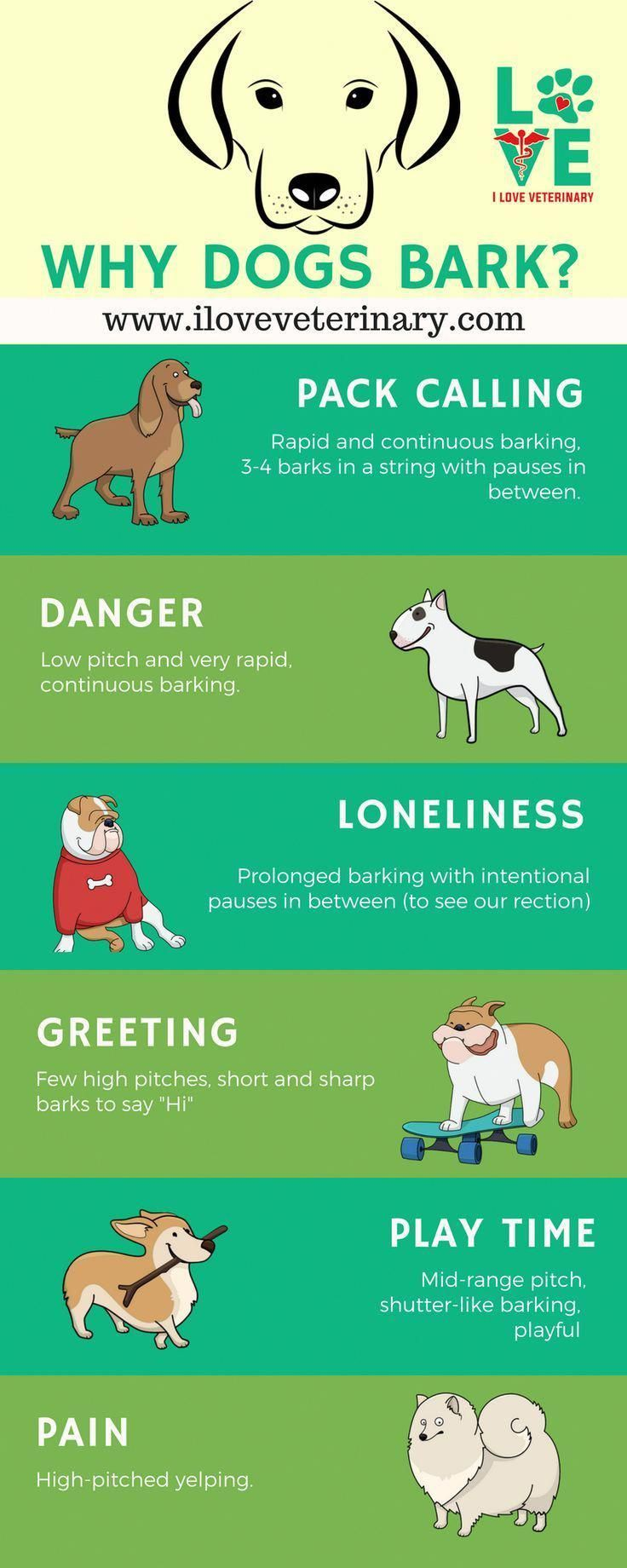 Every House Family Pet Dog Must Know And Have The Ability To