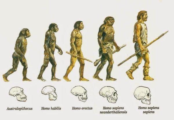 Resultado De Imagen Para La Vida Evolutiva Del Hombre Cuanto Media Su Craneo Evolucion Del Hombre Evolucion Humana Evolucion