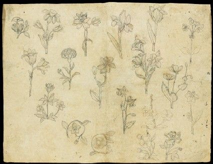Style: Mughal; Type: Elephants, birds, and flowers; Title: 'Sheet of flower studies', north India, c. 1650