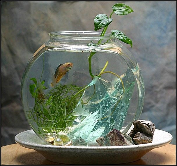 Unique fish bowls images galleries for Betta fish bowl ideas