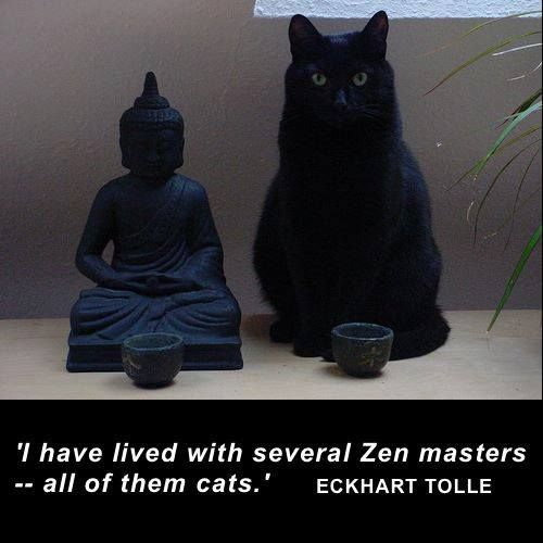 Image result for images of eckhart tolle with his cat