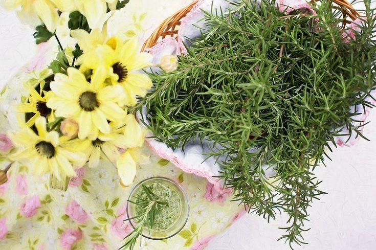 20 plantas que te ayudarán a luchar contra la caída del cabello | Plantas