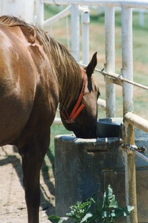 How to Clean Horse and Cattle Water Troughs, from AQHA