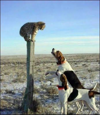 1000 Images About Treeing Walker Coonhound On Pinterest