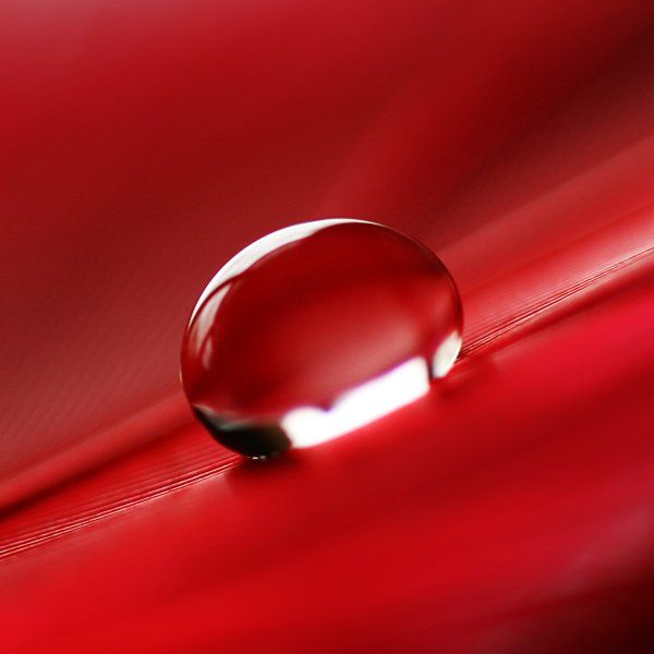 red hot drop: Red Colors, Colors Photography, Red Red, Red Drop, Dew Drop, Dewdrop, Tear Drop, Red Hot, Water Drop