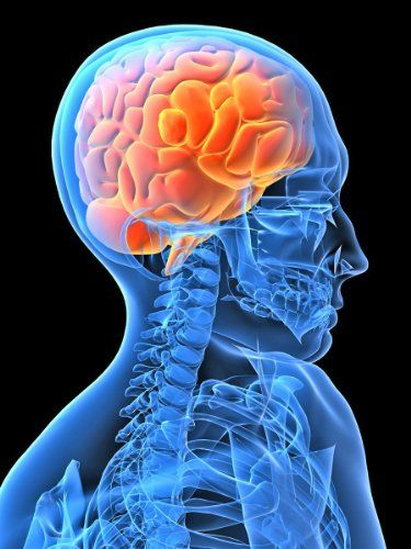 Neuroscience Laboratories investigates the effects of space flight on the human nervous system, with particular emphasis on posture and gait function, eye-head coordination, perception, space motion sickness and vestibular-autonomic function. #neurosciencelaboratories #neuroscience
