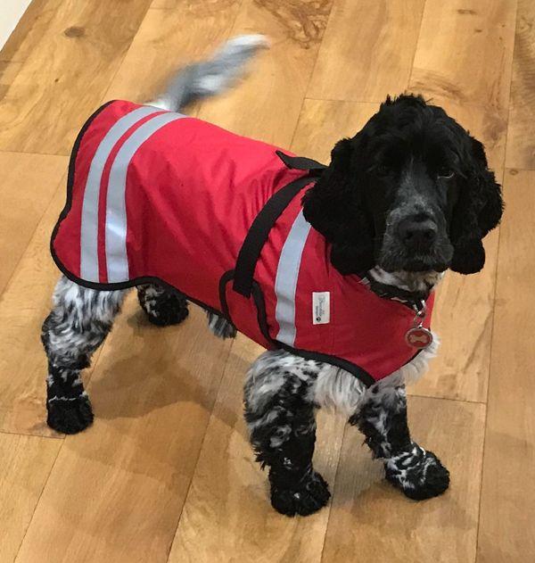 Lightweight Waterproof Dog Raincoat Dog Raincoat Waterproof Dog