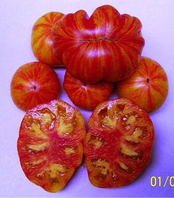 Pepper Anaheim Chili 100 Seeds Garden Seeds 2u