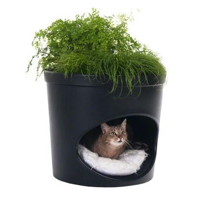 Pet Plante - jaskinia dla kota i doniczka
