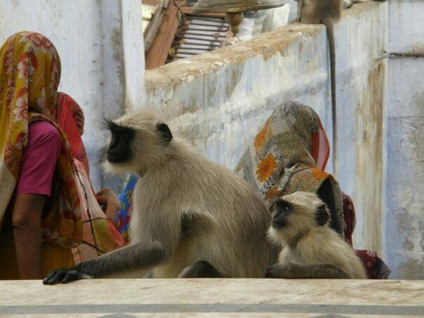 India. Patricia Bustos