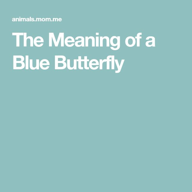 The Meaning of a Blue Butterfly