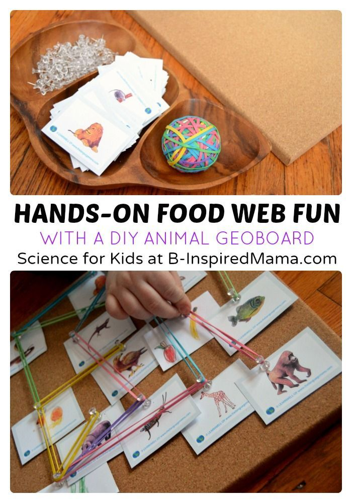 Hands-On Food Web Science for Kids - B-Inspired Mama - make a food web with animal cards, rubber bands, and a bulletin board.