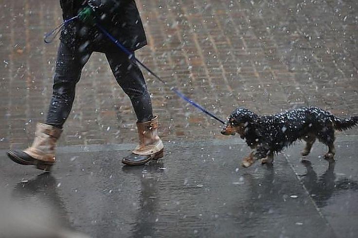 Картинки по запросу Дождь | Дождь, Картинки, Снег