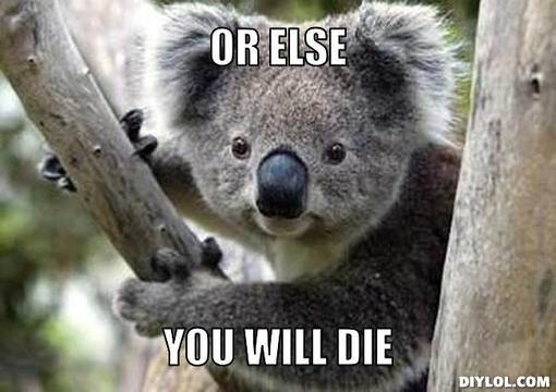 Koala meme  Koalas and...