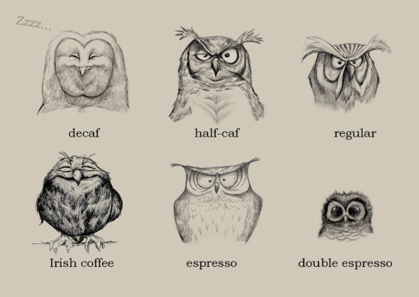 Coffee, illustrated as owls / via twitpic