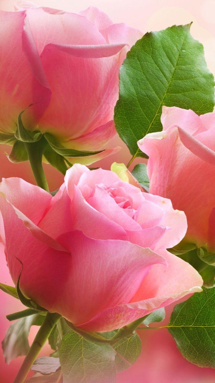 Para mi querida hermana Rosita epd 11/11/16 que esta en el cielo de jordi.